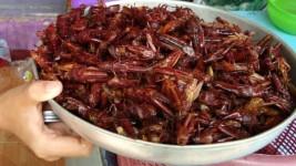 Ada Yang Baru Goreng Belalang Jadi Makanan Primadona Baru di Tasikmalaya