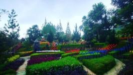 Barussen Hills Ciwidey, Tempat Wisata Keluarga Lengkap dengan Keindahan Memukau