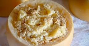 Casu Marzu Keju Belatung dari Sardinia Makanan Ekstrem dari Italia