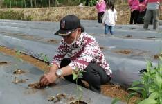 Bupati Jeje Sebut Bidang Pertanian di Pangandaran Berikan Ketahanan Pangan yang Luar Biasa Meski di Masa Pandemi
