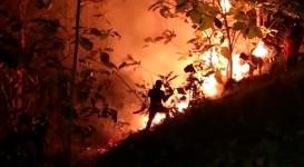 Penyebab Lahan Jati di Pangandaran Terbakar, Pusdalops : Mungkin  Ada yang Bakar Sampah Sembarangan