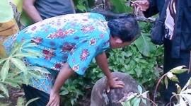 Situs Batu Cikabuyutan, Peninggalan Sejarah di Pangandaran Hilang, Kok Bisa?