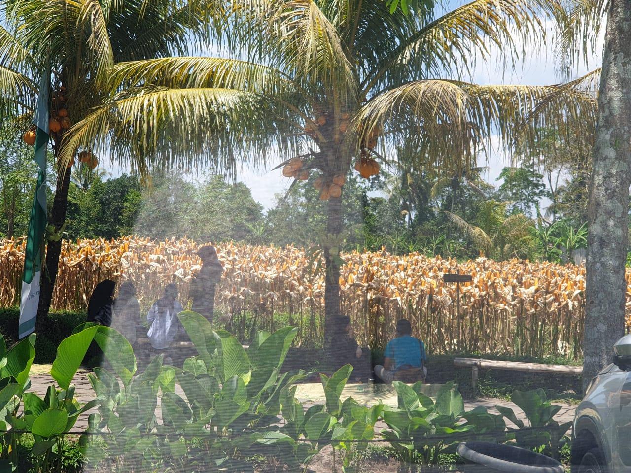 Warung Kopi Klotok Pakem, Wisata Kuliner Khas 'Ndeso' yang Sajikan Nuansa Pedesaan