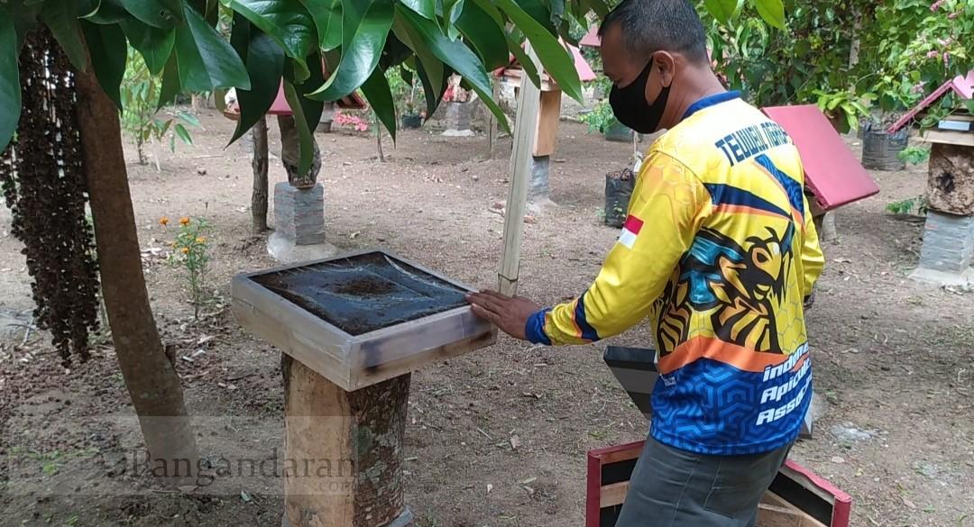 Tekuni Budidaya Madu Teuweul Lebah Trigona, KTH Banyu Metu Hasilkan Rp 150 Juta/bulan