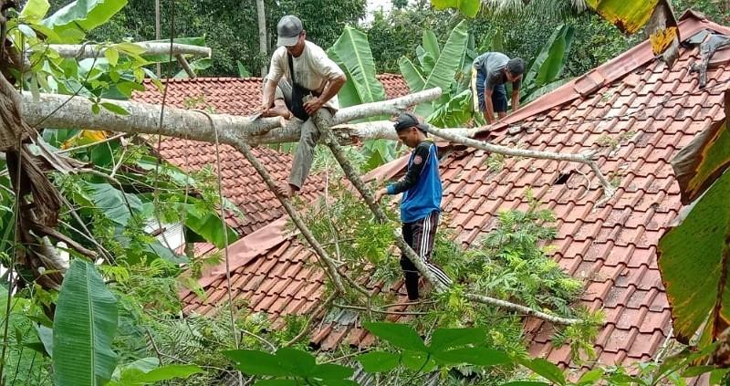 Diterjang Hujan yang Disertai Angin Kencang, Pohon di Pangandaran Roboh Timpa Rumah Warga