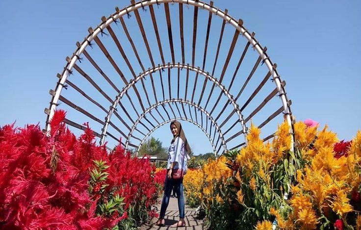 Romantic Garden Jogjakarta, Wisata Taman Bunga dengan Spot Foto yang Instragamable